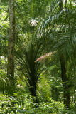 Rain-forest or tropical forest. Wide shot of a  rain-forest or tropical jungle Royalty Free Stock Images