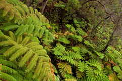 Rain forest vegetation Stock Images