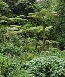 Rain forest vegetation in Africa Royalty Free Stock Photo