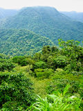 Rain forest vieuw. Vieuw point of a tropical rainforest  mountain range with fog in the back Stock Photos