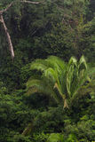 The Rain forest Stock Photography