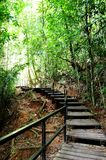 Rain Forest Walk Way Royalty Free Stock Photography