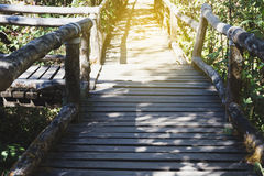 Rain forest walk way in Ang Ka nature trail located in Doi intha Stock Images