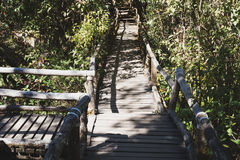 Rain forest walk way in Ang Ka nature trail located in Doi intha Stock Photo