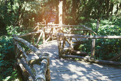 Rain forest walk way in Ang Ka nature trail located in Doi intha Royalty Free Stock Photos