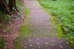 rain forest walk way Royalty Free Stock Photos
