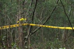 Rain forest Stock Photos