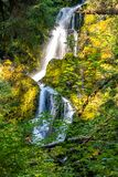 rain forest in washington state with waterfall in background stock photo
