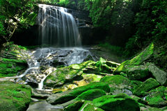 Rain Forest Waterfall Stock Photos