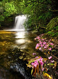 Rain Forest Waterfall and Flowers. Fallen rhododendron flowers frame a hidden lush waterfall (this is Schoolhouse Falls in Panthertown, North Carolina stock photos