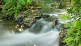 Rain forest waterfall Stock Image