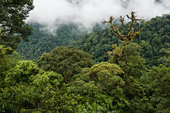 Rain Forest stock photos