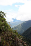 Rain forest in Yungas region, Bolivia Stock Photo