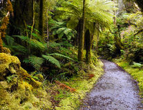 Rain Forests. Fiordland, National Park - temperate rain forests. Environmental Protection Royalty Free Stock Photo