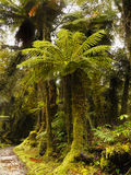 Rain Forests. Fiordland, National Park - temperate rain forests. Environmental Protection Stock Photos