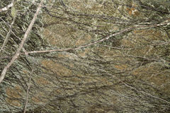 Stone texture polished marble Rain forrest green Stock Photography