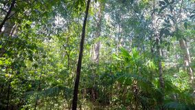 Rain forrest north sulawesi, indonesia stock footage