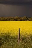 Rain front approaching Saskatchewan canola crop Royalty Free Stock Photography