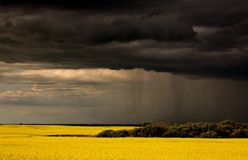 Rain front approaching Saskatchewan canola crop Stock Images