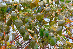 Rain frozen and leaves Royalty Free Stock Images