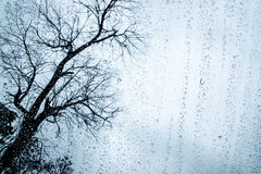 Rain on glass window with dead tree background. Rain drop on glass window with dead tree background Royalty Free Stock Photo