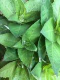 Rain grass stock images
