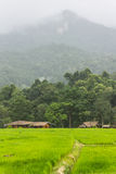 Rain Green Field And Mountain in Doi inthanon, Maeglangluang Stock Images