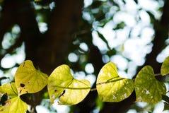 Rain on a green leaf Royalty Free Stock Photos