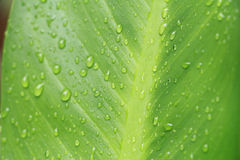 Rain and green leaf Royalty Free Stock Images