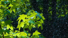 Rain on the Green Leaves stock footage