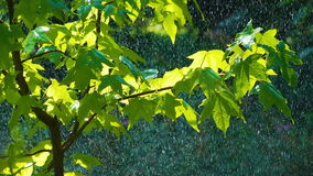 Rain on the Green Leaves stock video footage