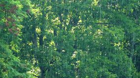 Rain and The Green Nature stock video