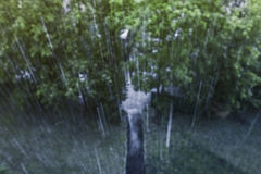 Rain and green trees Royalty Free Stock Images