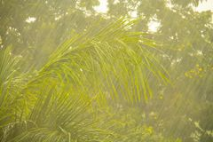 Rain with greenery background. With awesome textures Royalty Free Stock Images