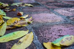 Rain gutter full of autumn leaves Stock Photos