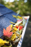 Rain gutter full of autumn leaves Stock Image
