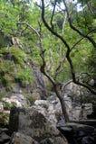Rain jungle, China, Hainan Island, park Yanoda Royalty Free Stock Photos