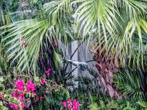 Rain in the jungle Royalty Free Stock Photo