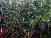 Rain in the jungle Stock Photo
