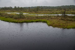 Rain in Kakerdaja Bog Royalty Free Stock Images
