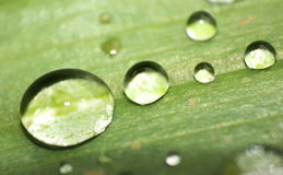 After a rain on a leaf. Water drops appeared after a rain on a leaf stock photography
