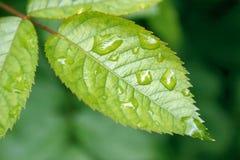 Rain on a leaf Stock Photography