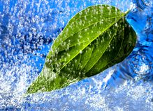 Rain on leaf Royalty Free Stock Photography