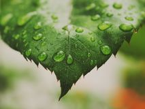Rain. And leaf stock photography
