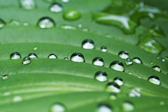 Rain on leaf abstract Royalty Free Stock Images