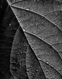 Rain on leaf close up. A close up, detail shot of rain drops sitting on a leaf Royalty Free Stock Photography
