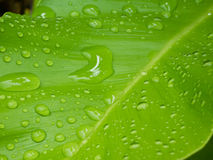 Rain on leaf Stock Images