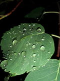 Rain leaf. It rain and I had to take it royalty free stock photography