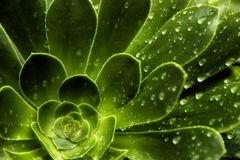 Rain Leaf Pattern Stock Images