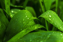 After a rain on a leaf Royalty Free Stock Photos